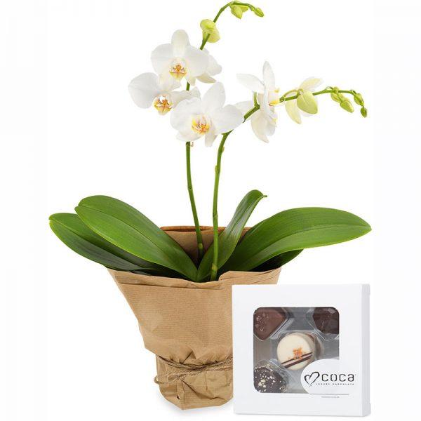Orkidé og sjokolade gavesett fra nettblomst.no