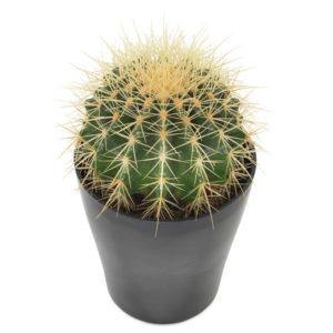 Grønn kaktus fra nettblomst.no